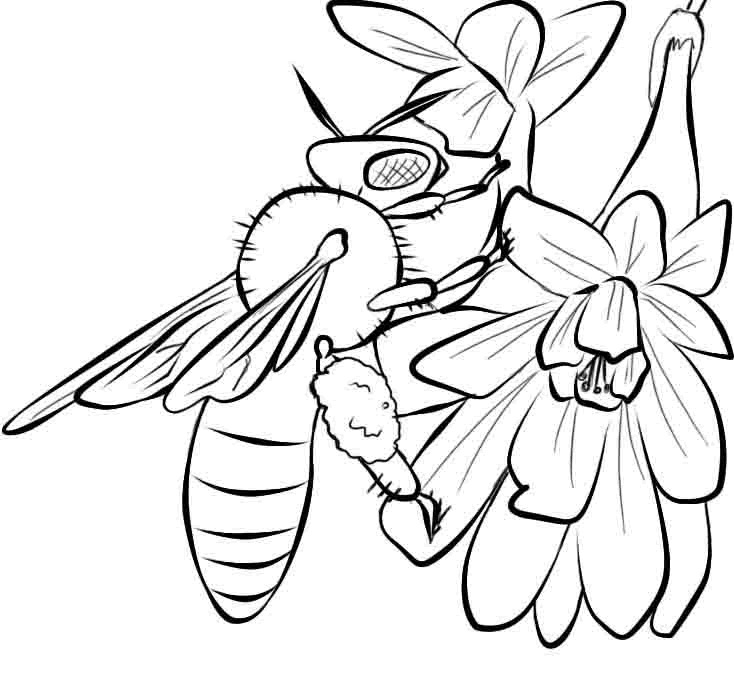 Free Printable Bee Coloring Pages For Kids - Coloring Pages