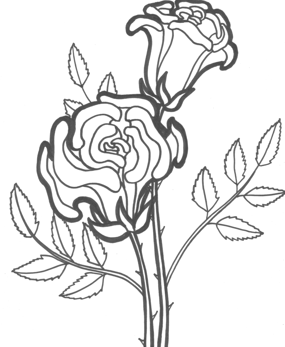Coloring sheets roses - Coloring Pages Of Rose