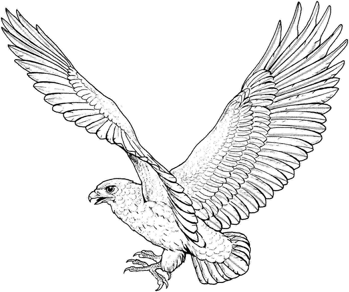 coloring pages of eagles - photo#4