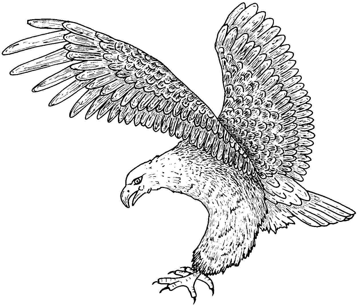 cute cartoon eagles coloring pages