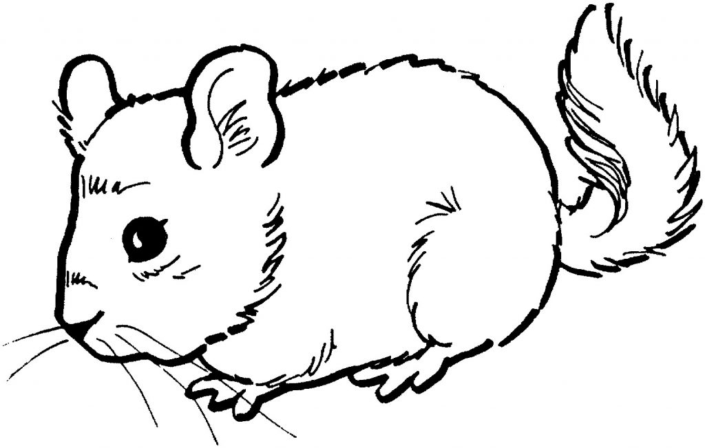 Coloring pages of a mouse ~ Free Printable Mouse Coloring Pages For Kids