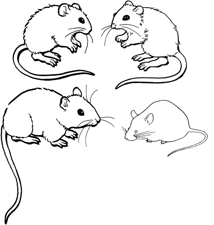 mice printable coloring pages - photo#4