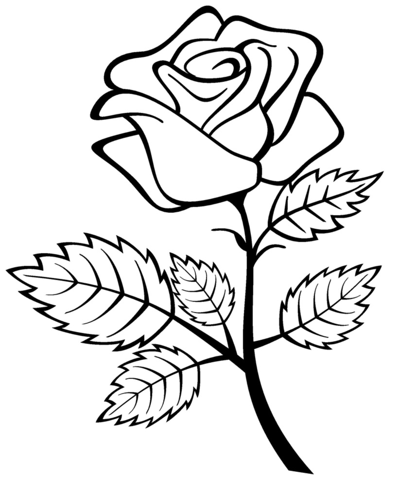 printable roses coloring pages - Rose Coloring Pages