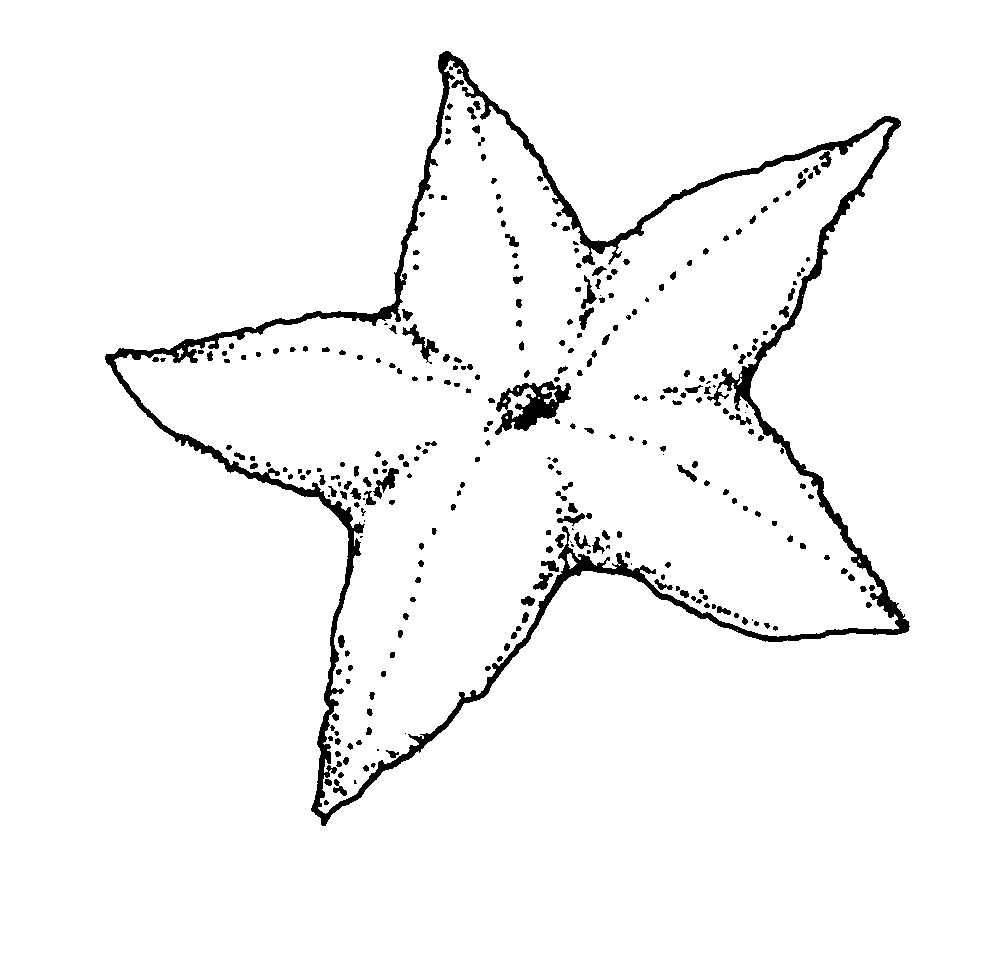 Free star fish coloring pages ~ Free Printable Starfish Coloring Pages For Kids