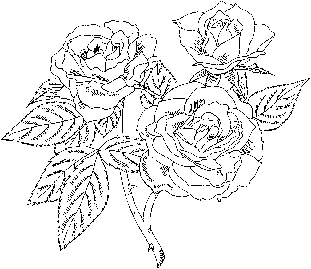 rose coloring pages for kids - photo#30