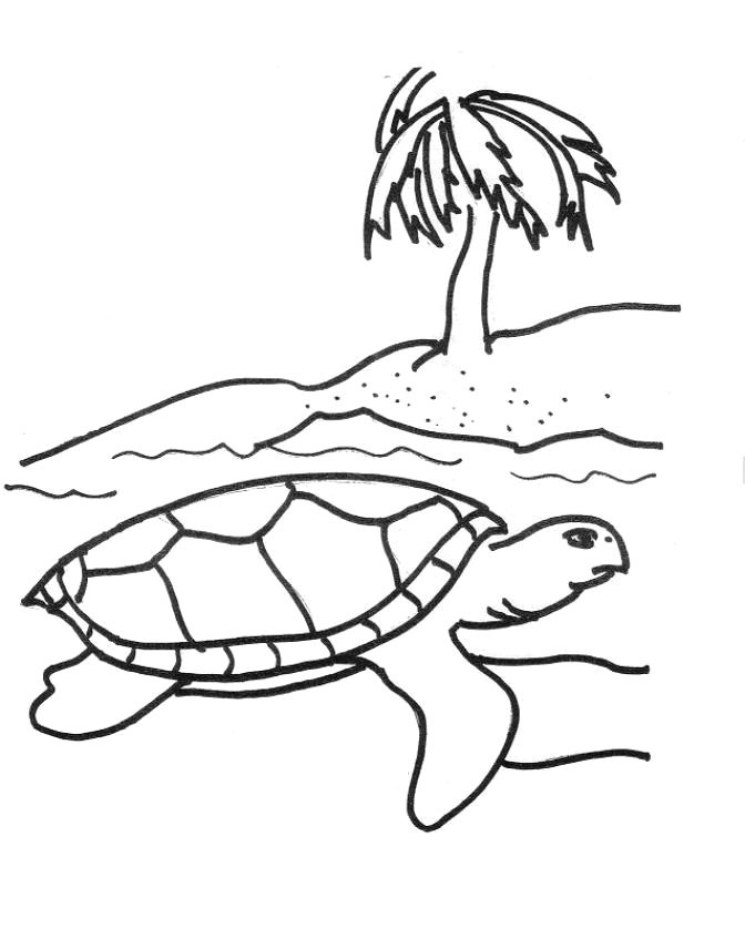 sea turtles coloring pages free printable sea turtle coloring pages for kids
