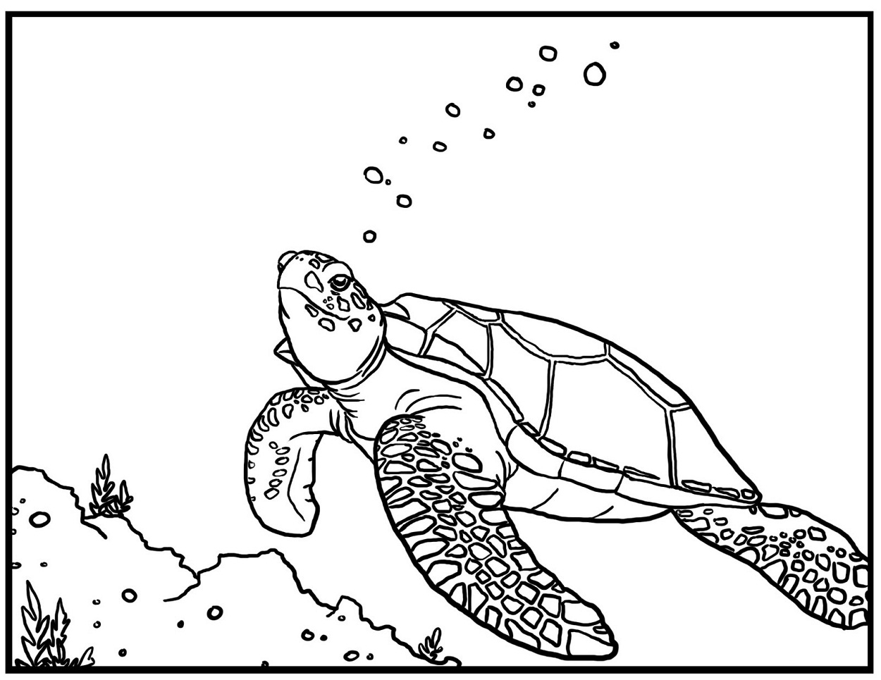 Sea Turtle Coloring Pages For Kids