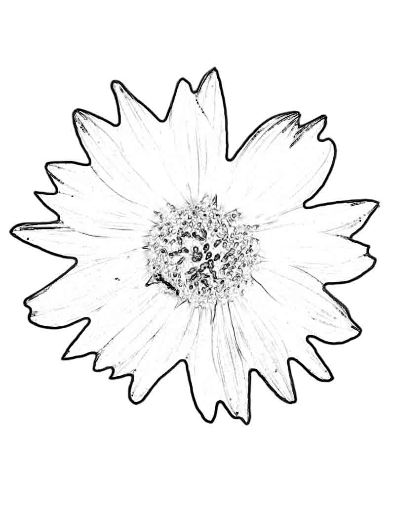 Daisy scout petal coloring pages - Sunflower Coloring Pages