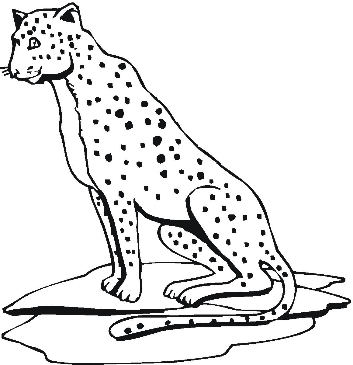 coloring pages cheetah - photo#23