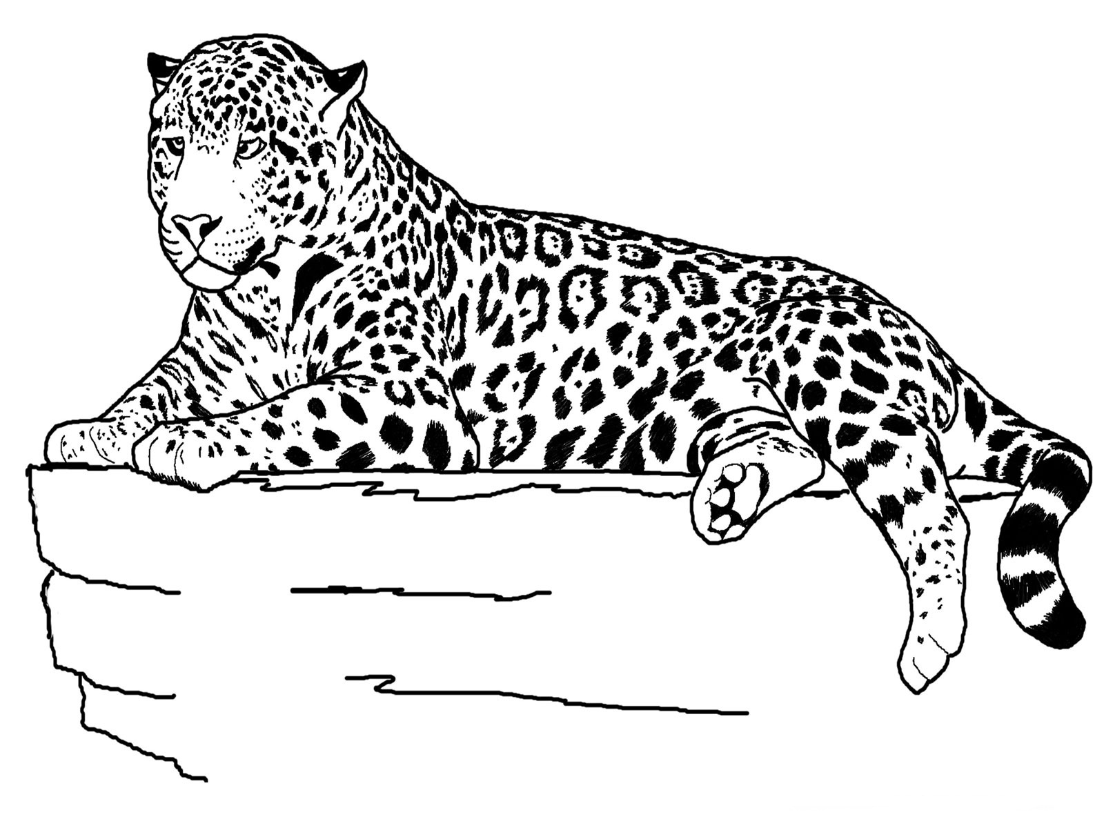 Free printable cheetah coloring pages for kids for Animal coloring pages printable free