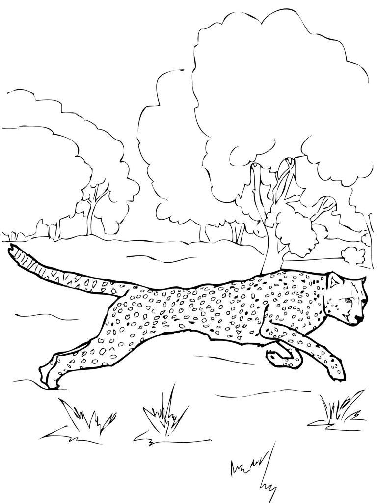 Free Printable Cheetah Coloring