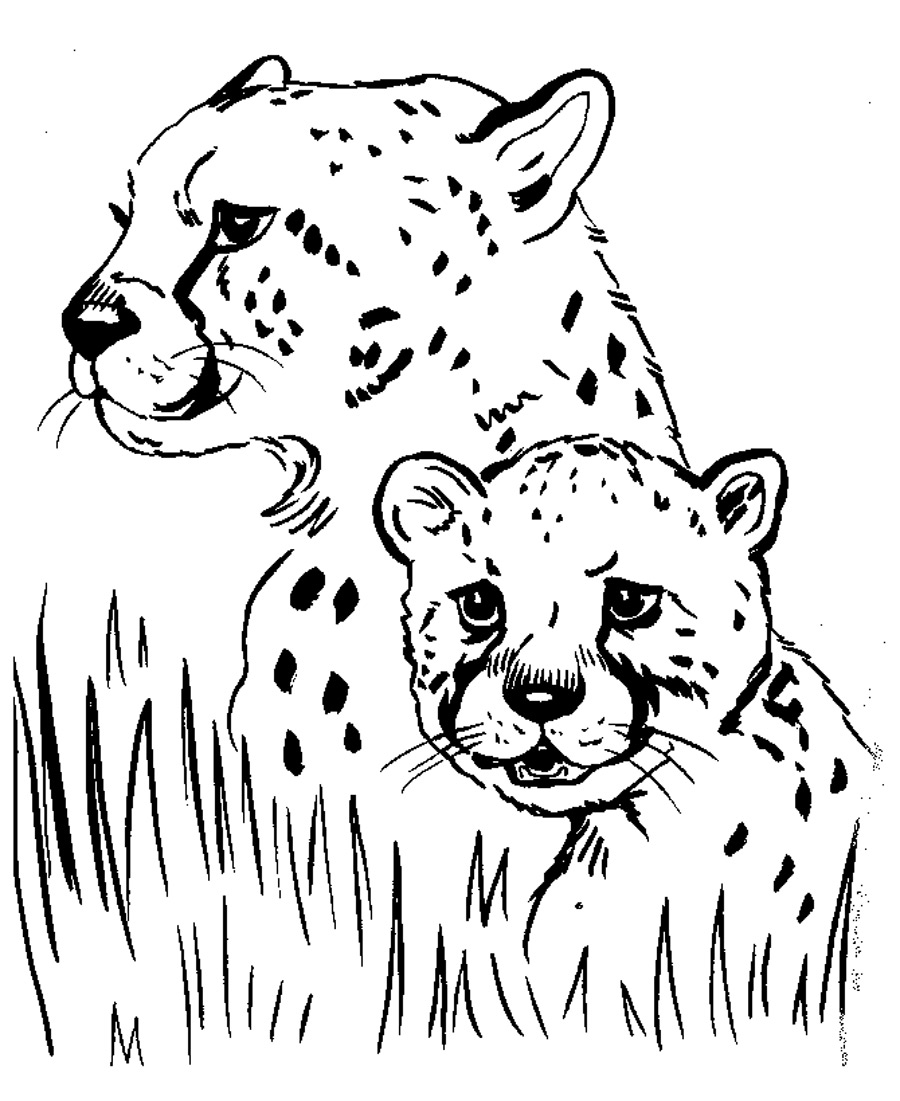 Free printable cheetah coloring pages for kids for Coloring book pages free