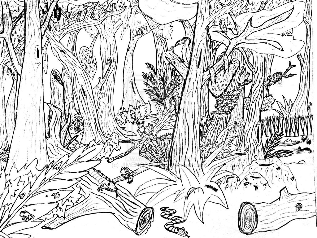 forest coloring pages - photo#13