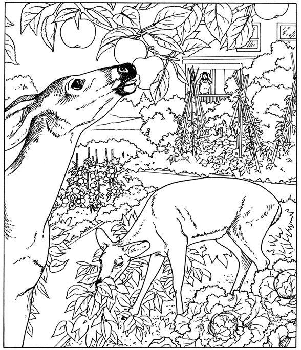 Galerry nature coloring pages