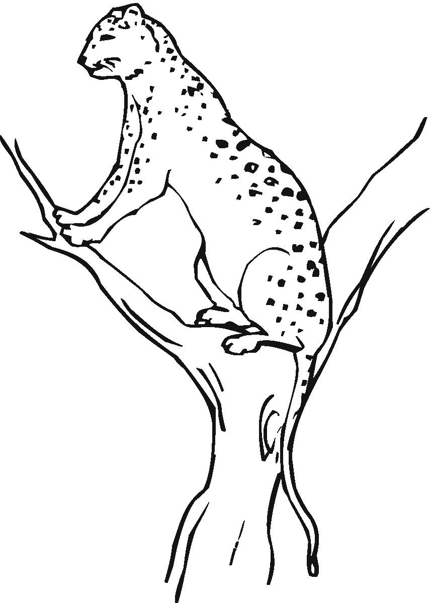 coloring pages cheetah - photo#12