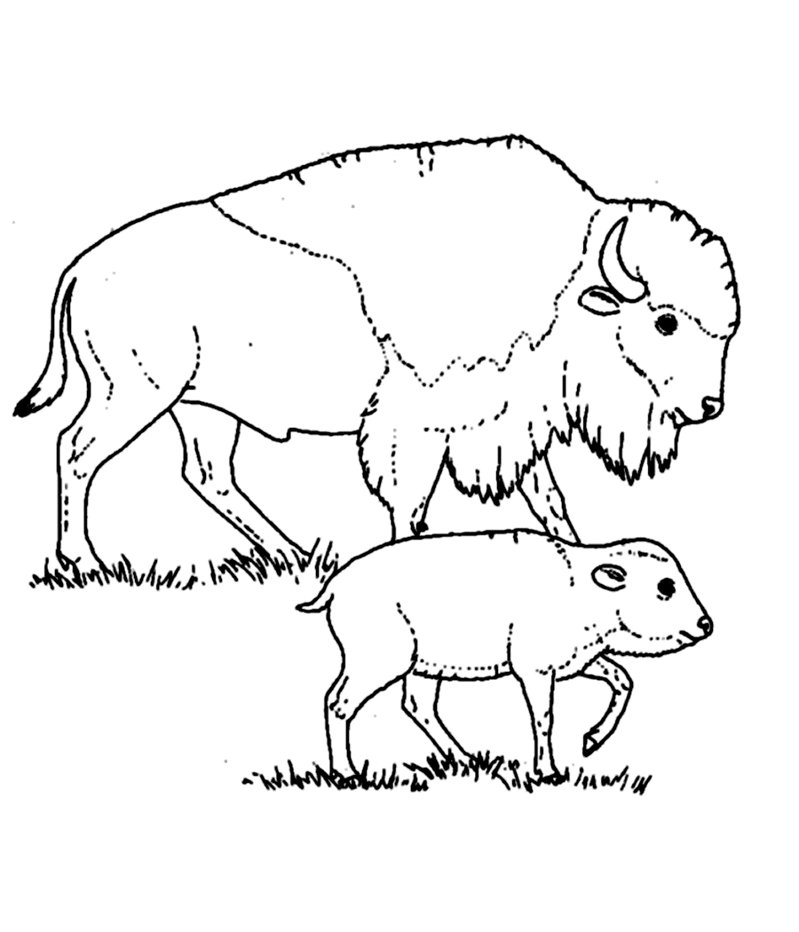 Uncategorized Bison Coloring Pages free printable bison coloring pages for kids page