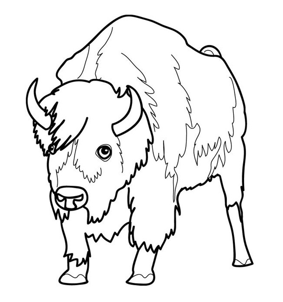 Bison Coloring Pages Photos