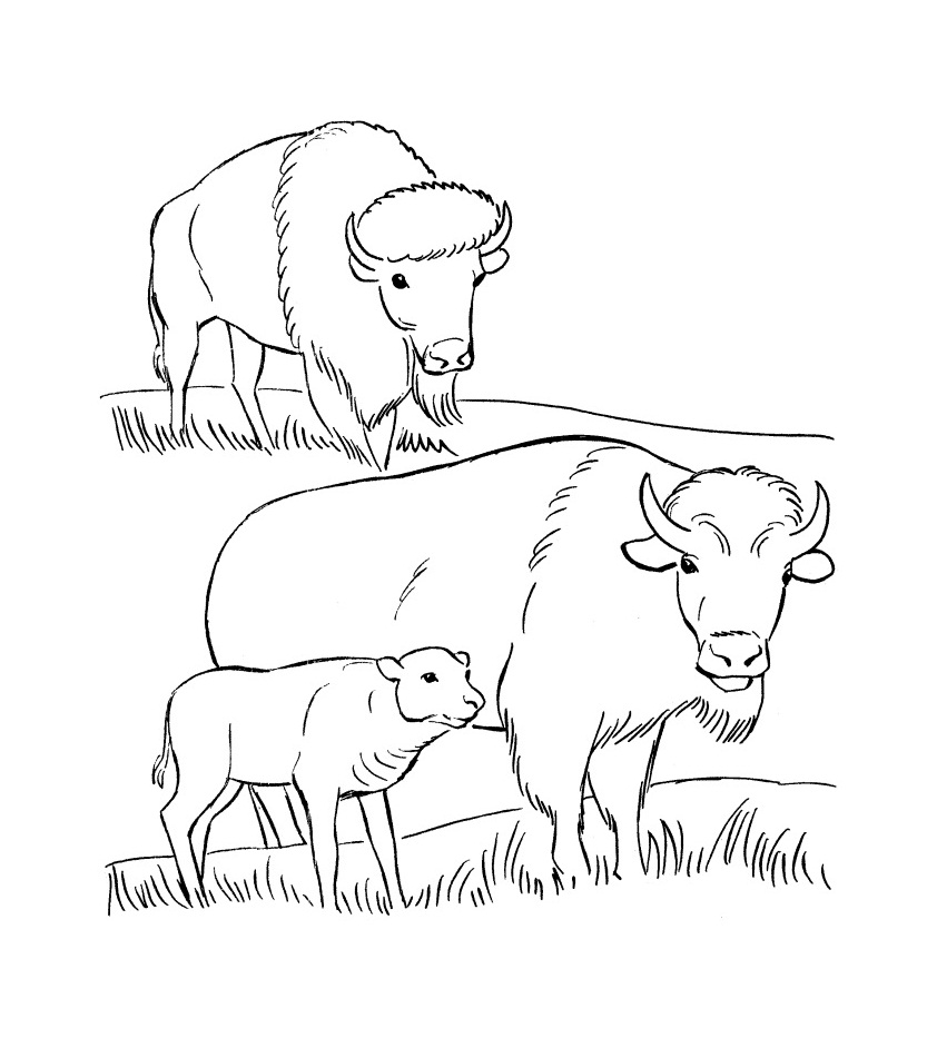 Bison Coloring Pages to Print