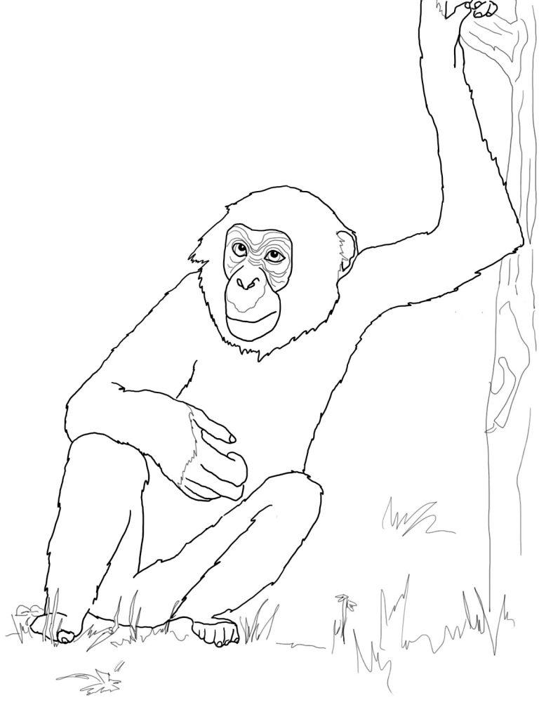 Chimpanzee Coloring Pages Pictures