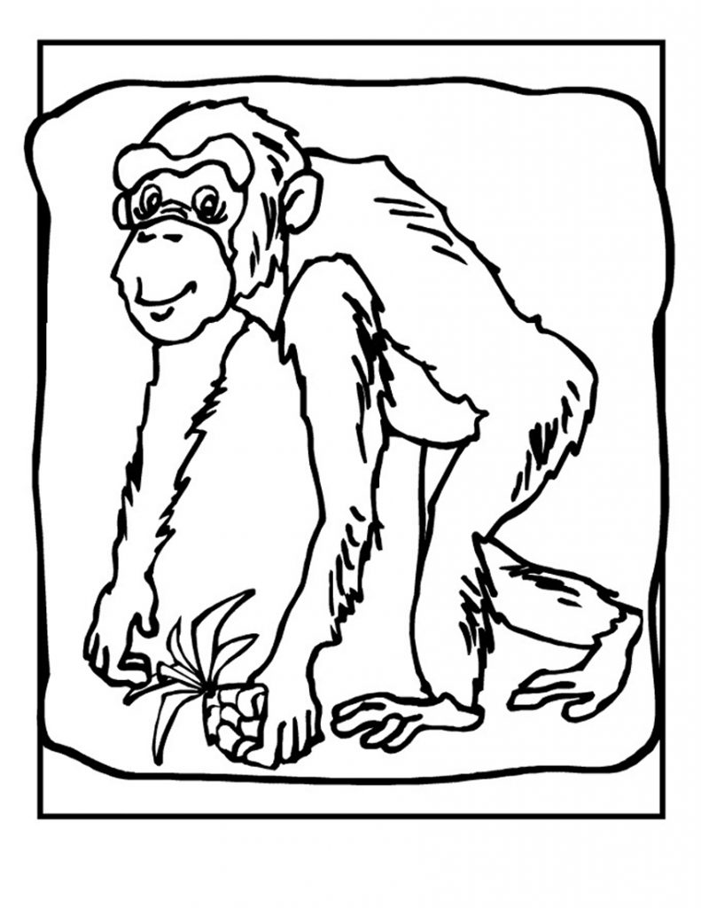 Chimpanzee Coloring Pages Printable