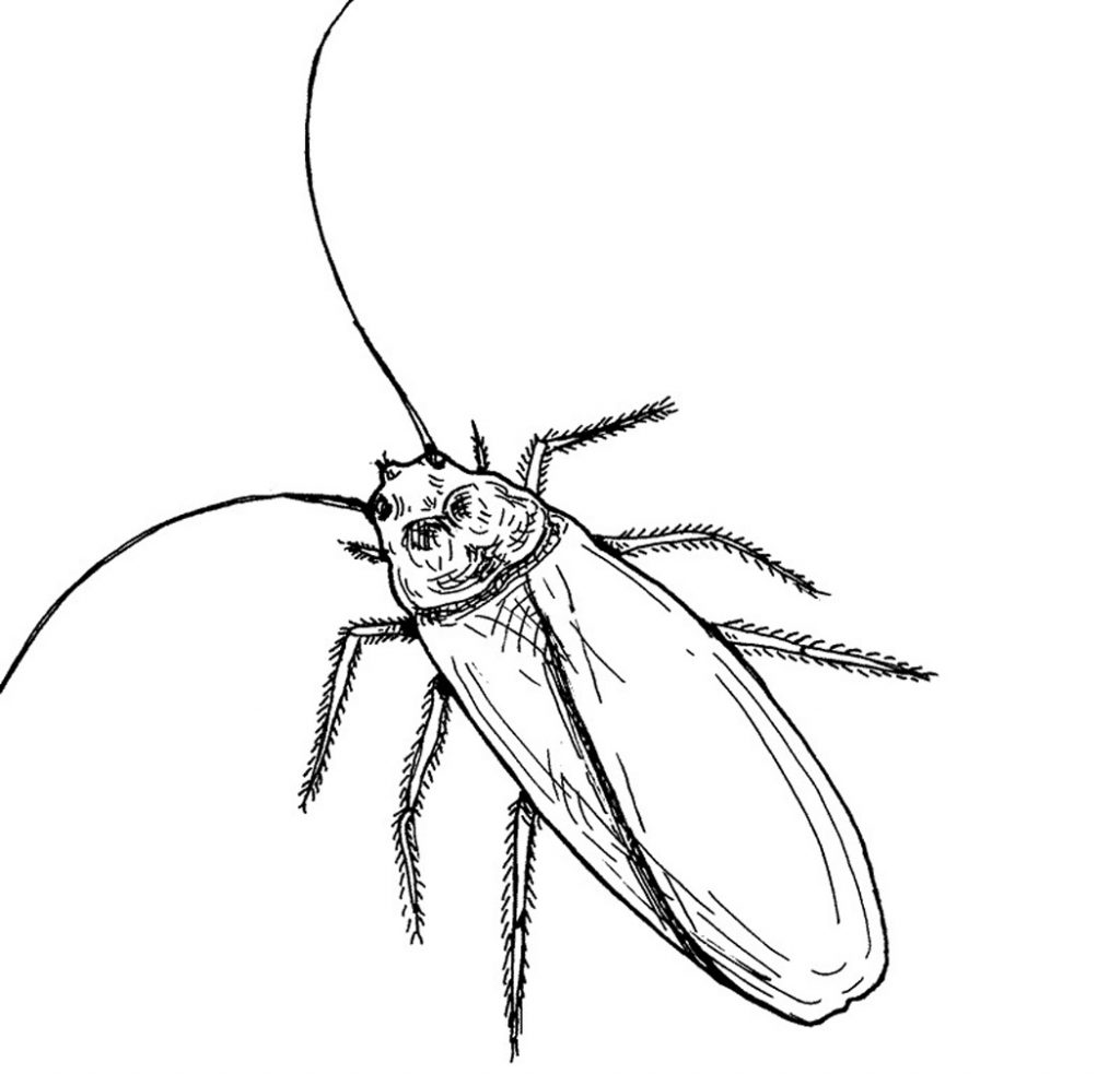 Cockroach Coloring Page