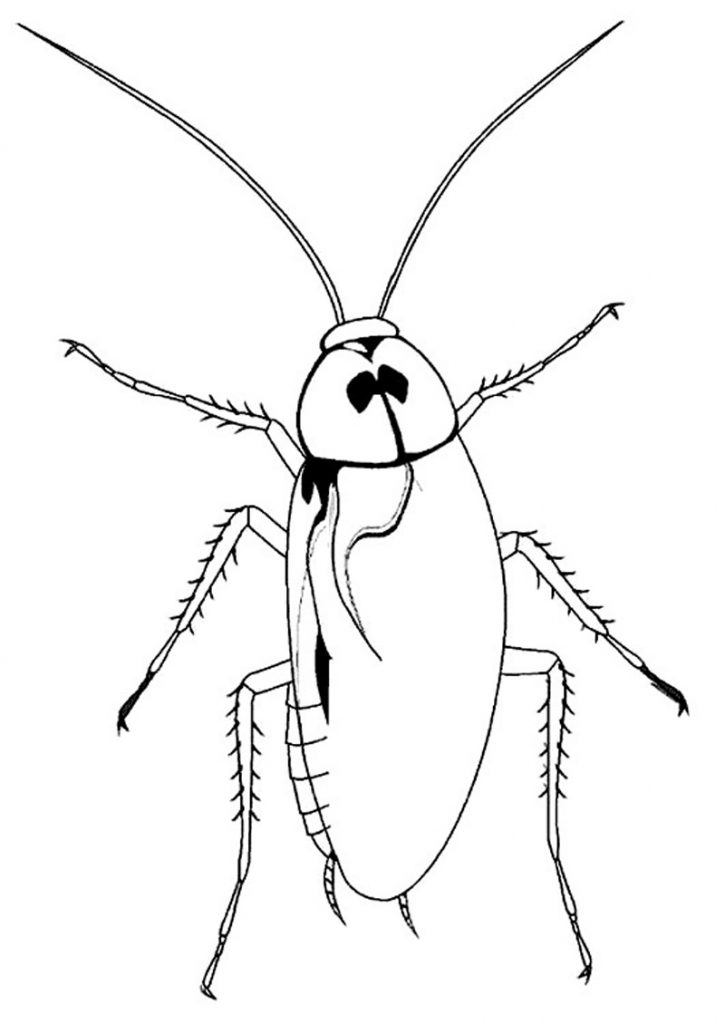 Cockroach Coloring Pages Printable