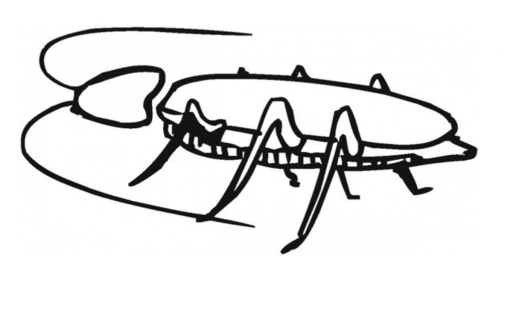 Cockroach Coloring Sheets