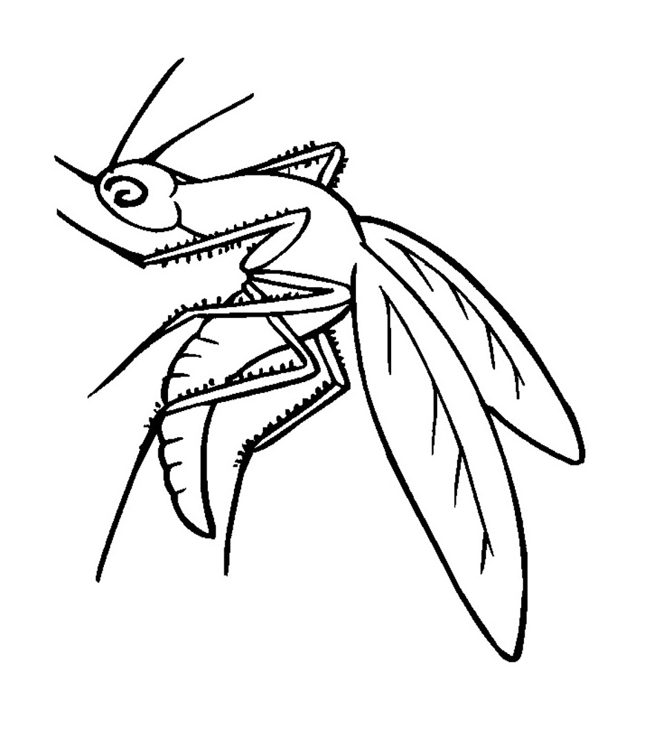 Coloring Pages Of Mosquito