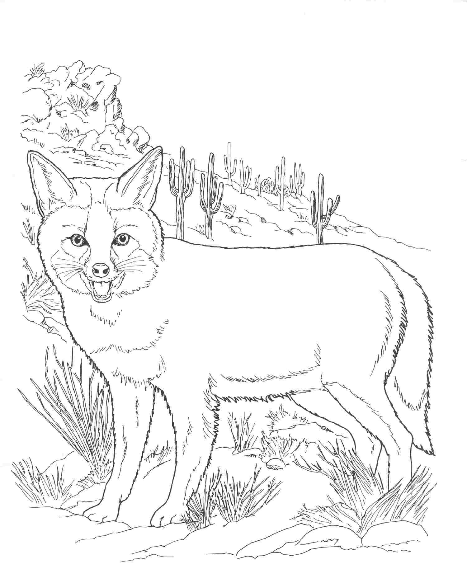 Free printable fox coloring pages for kids for Coloring pages of wild animals
