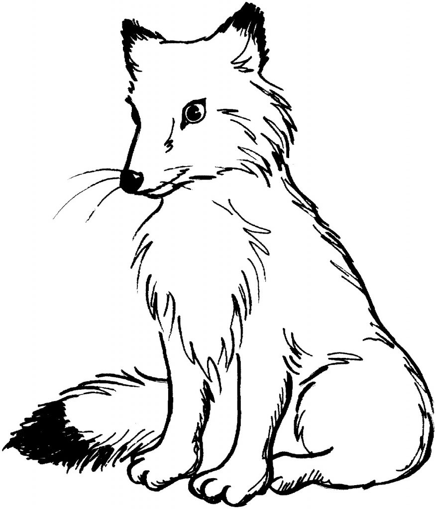 Crush image throughout printable fox coloring pages