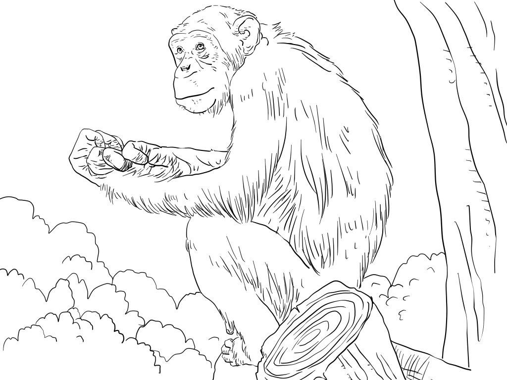 Free Printable Chimpanzee Coloring Pages