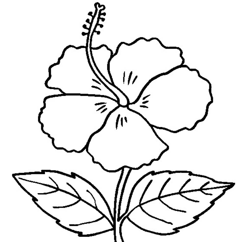 Free Printable Hibiscus Coloring Pages For Kids Free Colouring Page