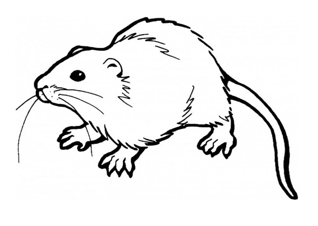 Free Rat Coloring Pages