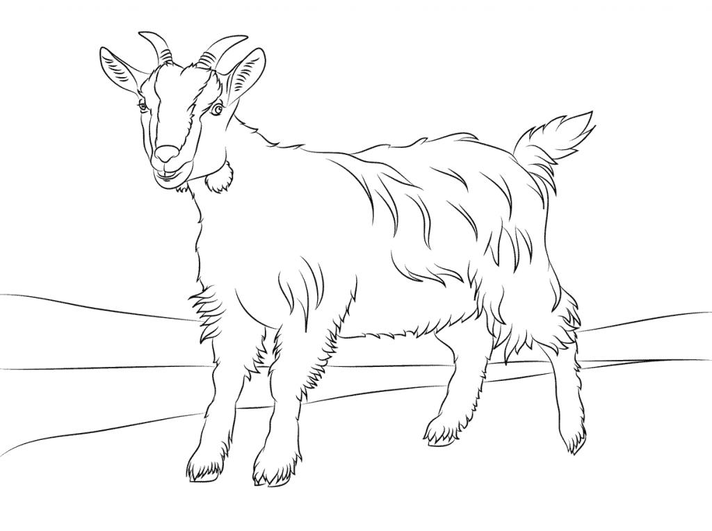 Free printable goat coloring pages for kids - Immagini da colorare capra ...