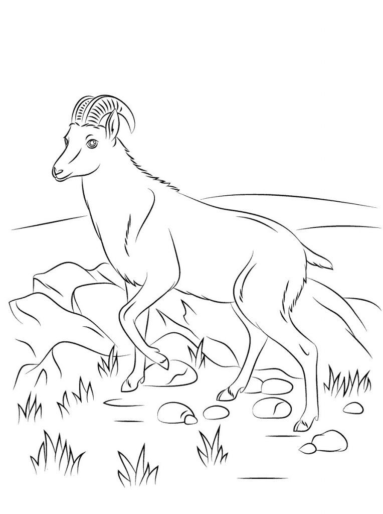Goat Coloring Pages Pictures