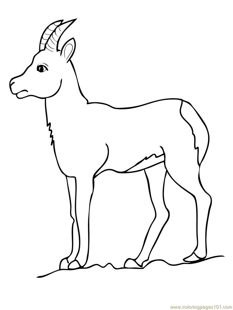 goat coloring pages printable - Coloring Page Goat