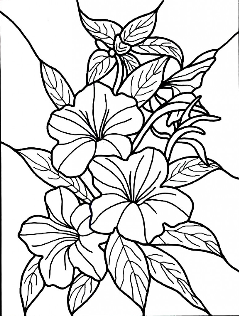 Free printable hibiscus coloring pages for kids for Coloring pages of a flower