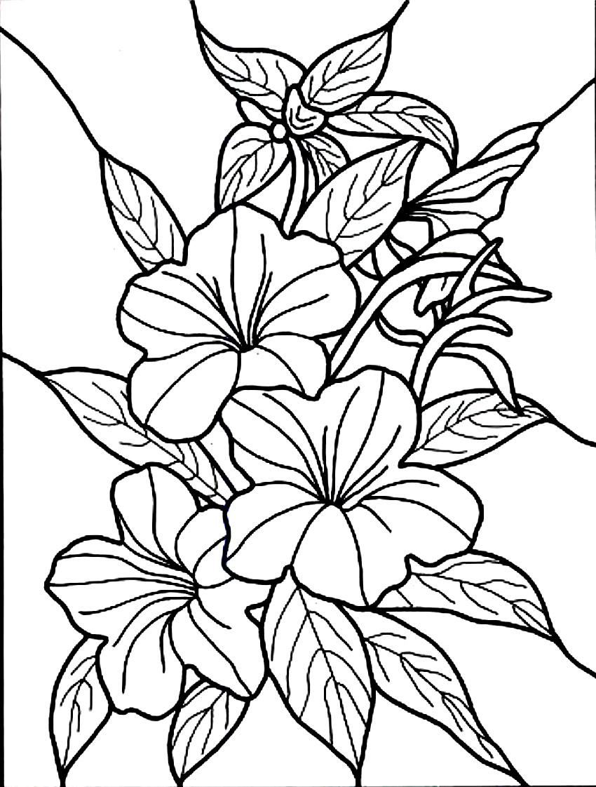 Free printable hibiscus coloring pages for kids for Flower adult coloring pages