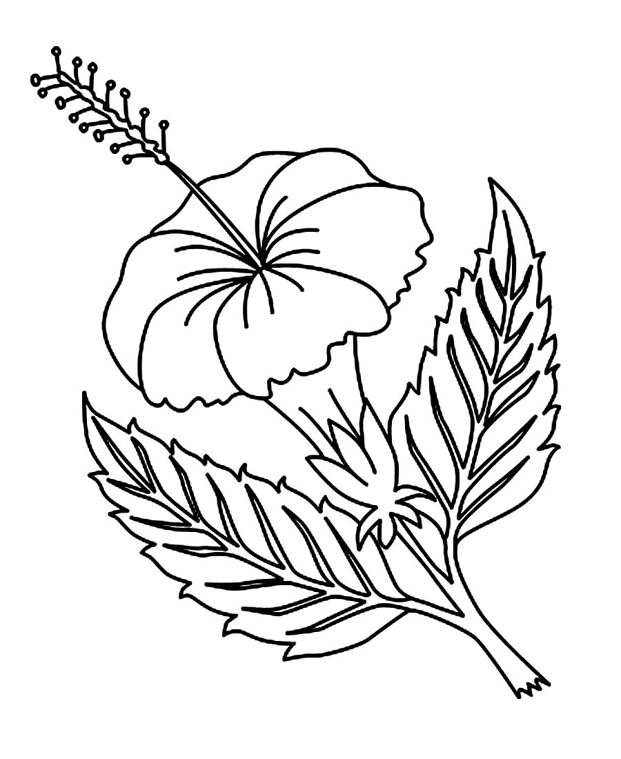 Flower coloring in pages - Hibiscus Flower Coloring Pages Printable