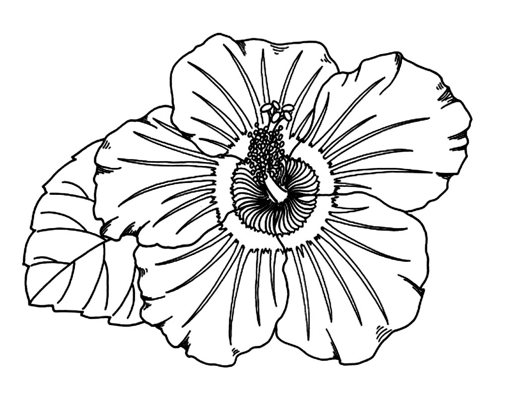 Uncategorized Hibiscus Coloring Pages free printable hibiscus coloring pages for kids flower kids
