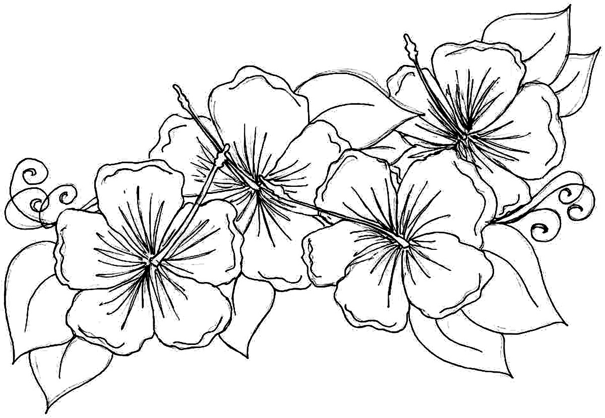 Coloring printouts flowers - Hibiscus Flower Coloring Pages
