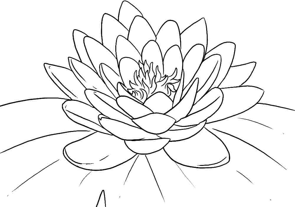 Free printable lotus coloring pages for kids for Coloring pages for kids flowers