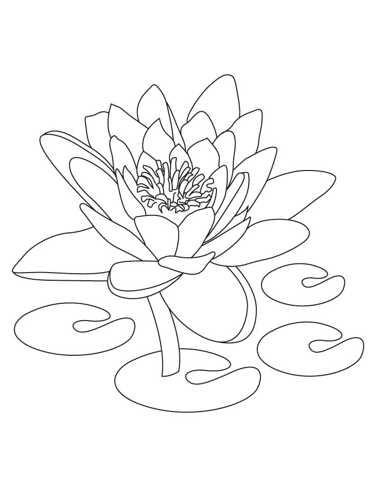 Lotus Coloring Pages For Kids