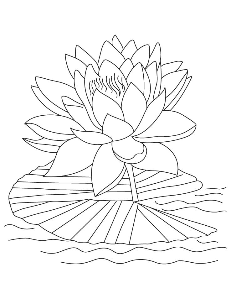 lotus coloring pages to print - Lotus Flower Coloring Page