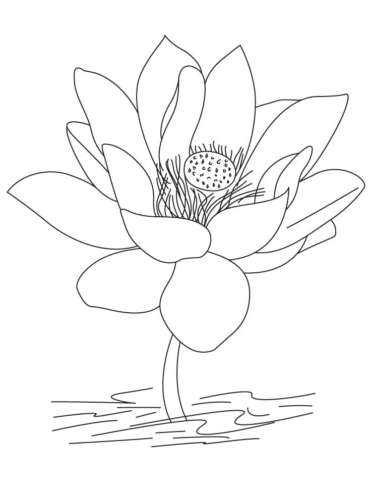 lotus coloring pages - Lotus Flower Coloring Page