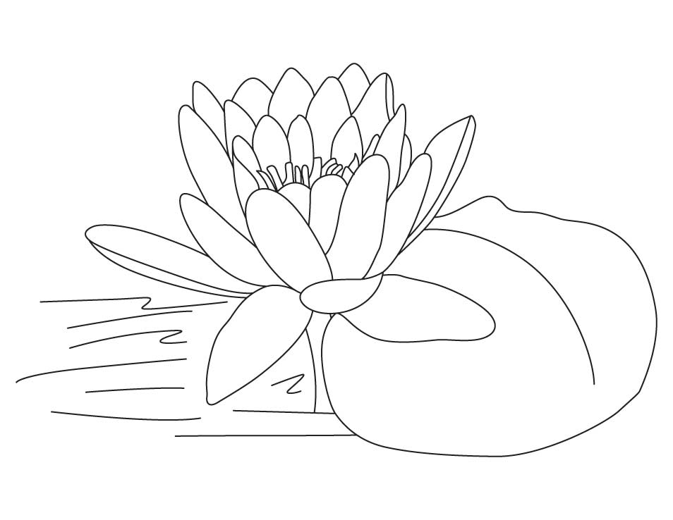 Lotus flower coloring pages free : Free printable lotus coloring pages for kids