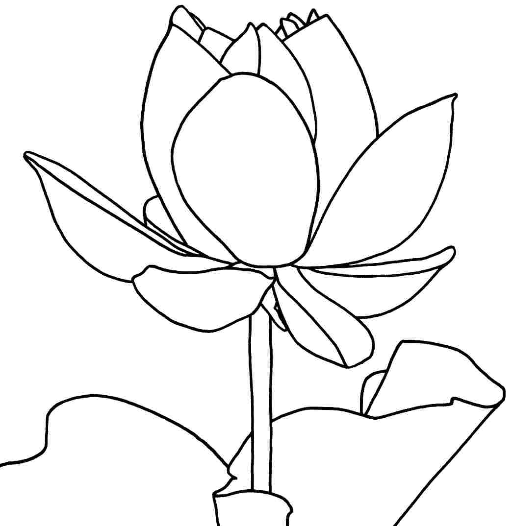 Free printable lotus coloring pages for kids for Coloring pages of a flower