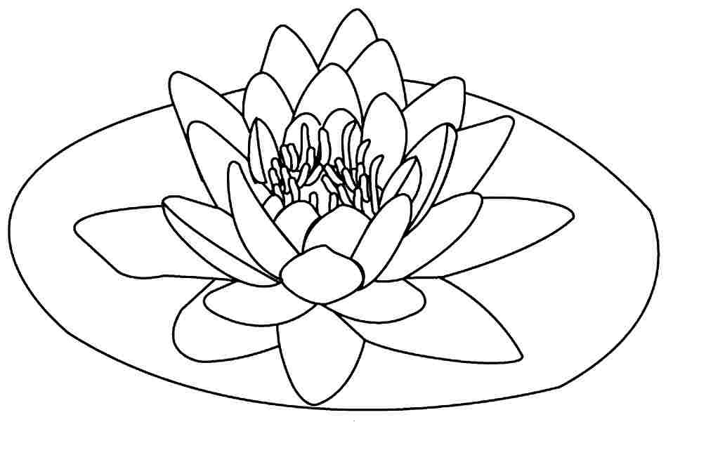 lotus flower coloring pages to print - Lotus Flower Coloring Page