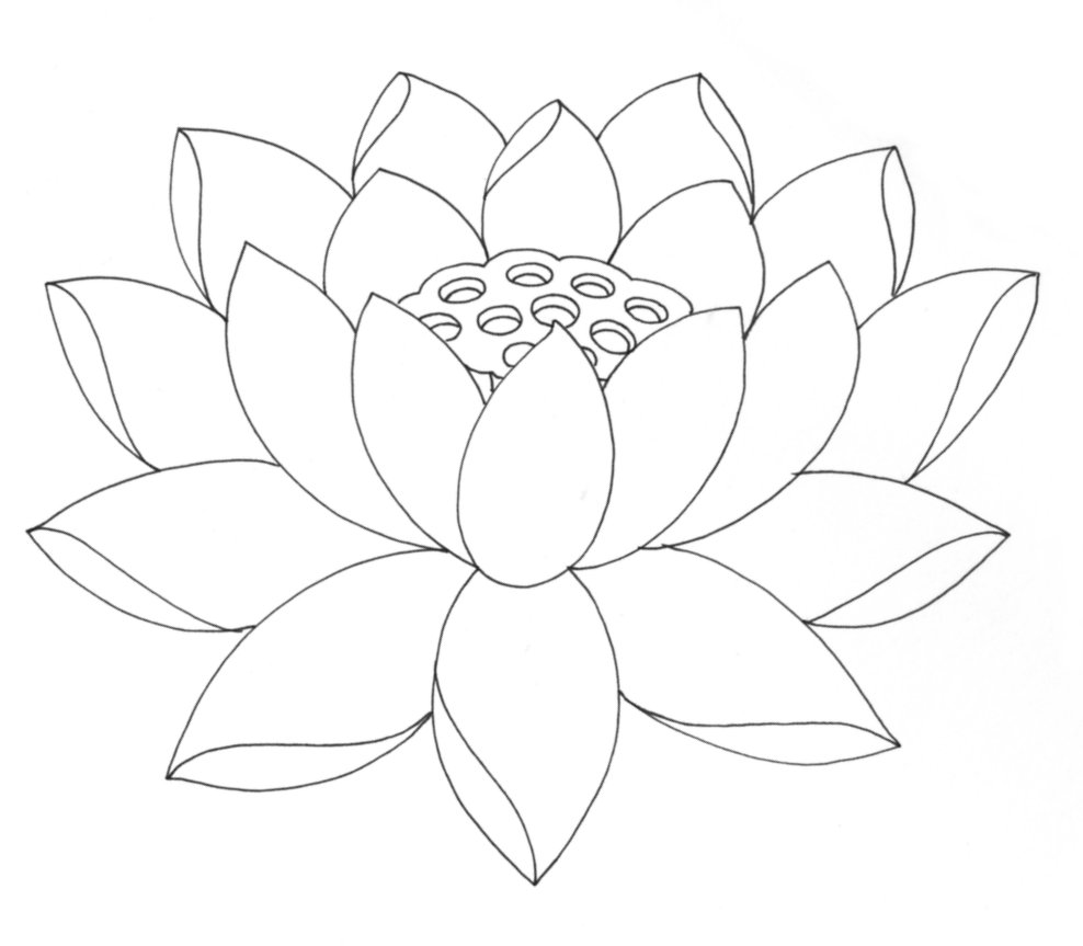 Line Drawing Of Lotus Flower : Free printable lotus coloring pages for kids