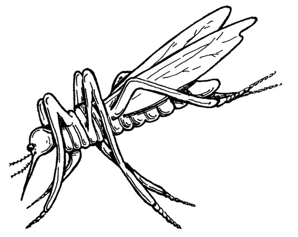 Mosquito Coloring Pages Pictures